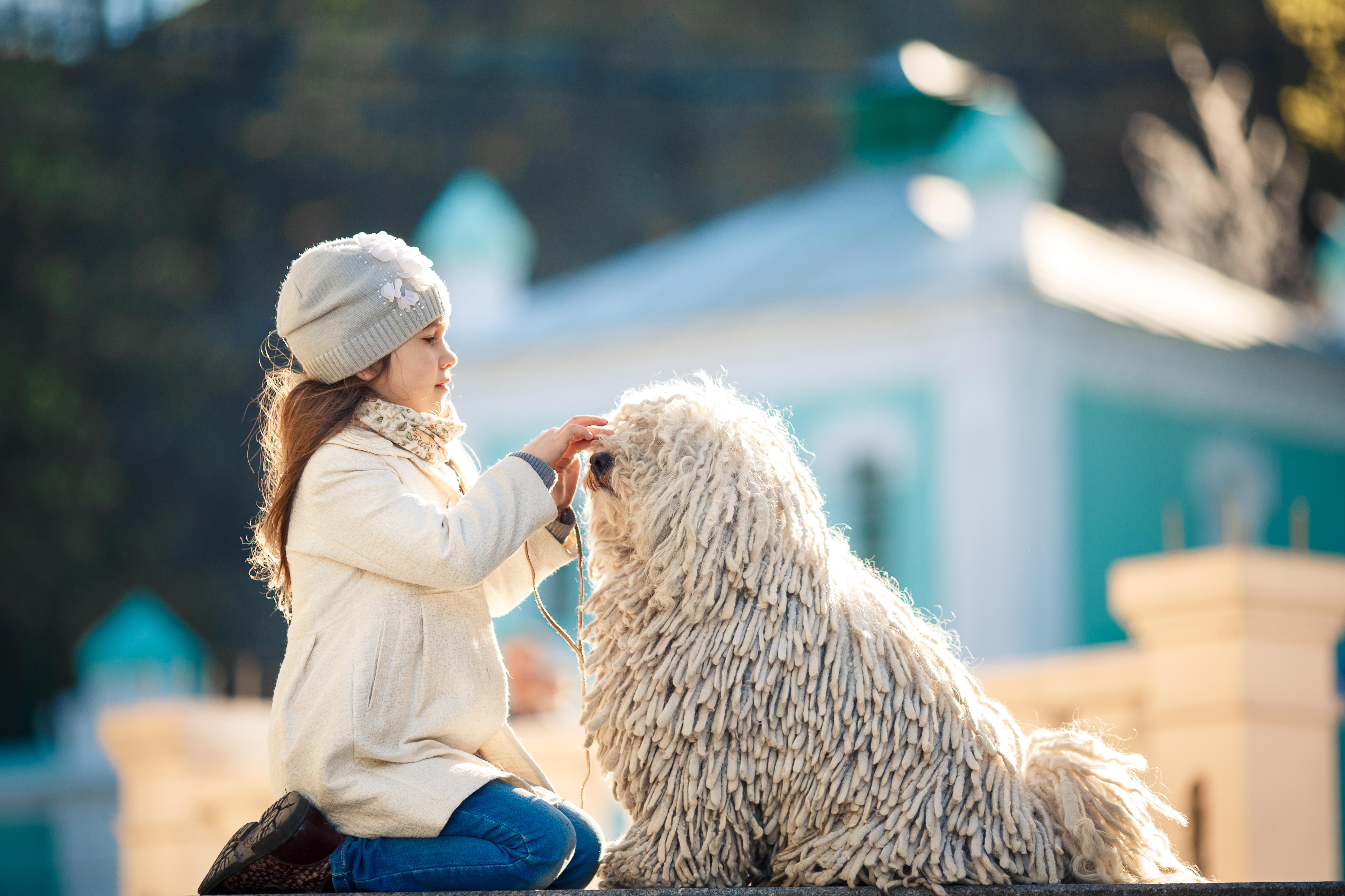 これを見ればプーリーの全部が分かる!可愛い家族を大切にする飼い主のための豆知識。
