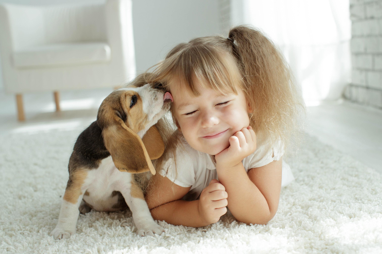 新型コロナウイルス感染爆発の今、愛犬との接し方はどうすればいい?