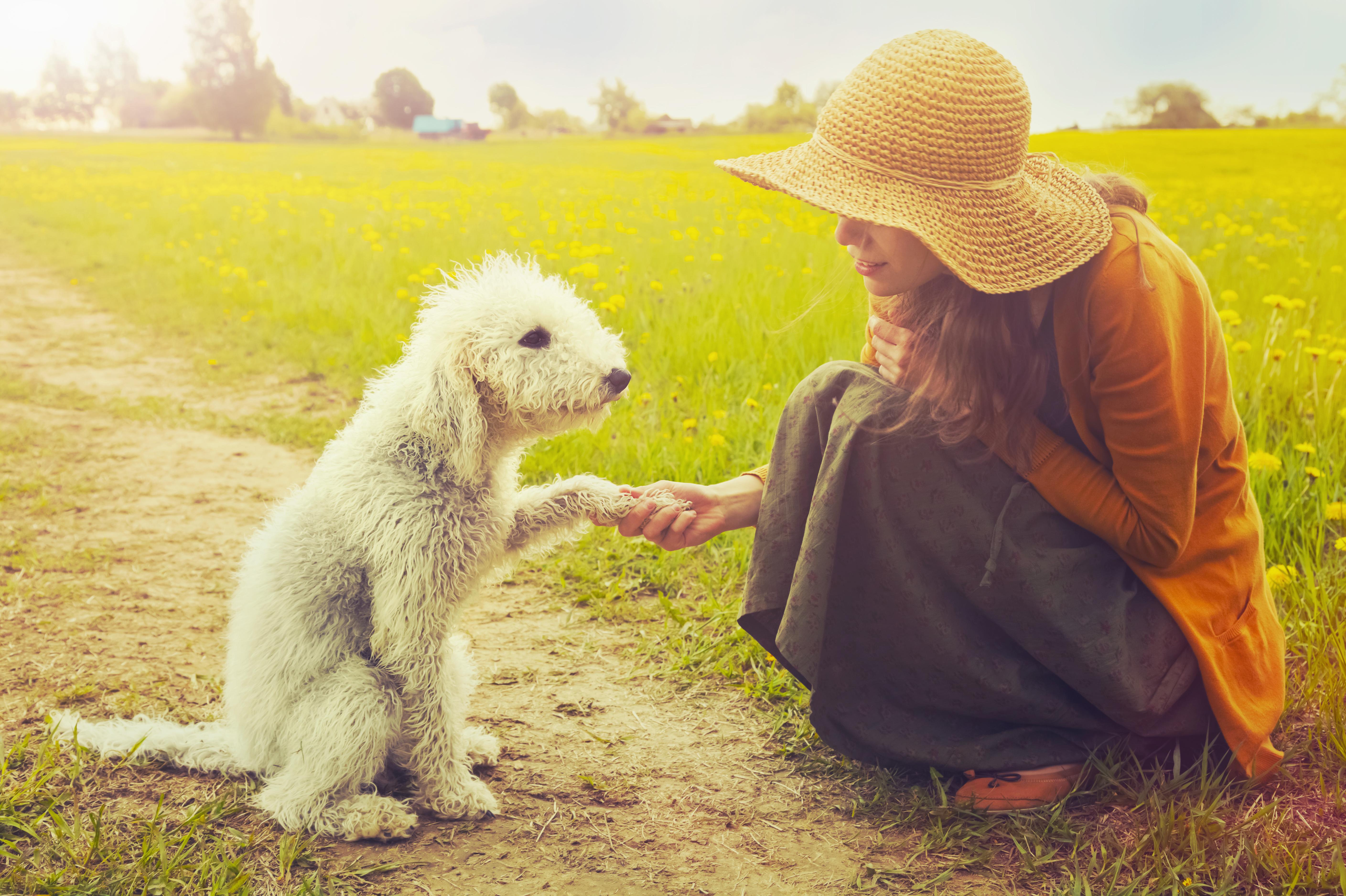 これを見ればベドリントンテリアの全部が分かる!可愛い家族を大切にする飼い主のための豆知識。
